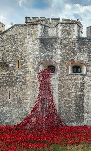 View of the installation of ceramic poppies in the Tower of London's © RLeaHairHRP